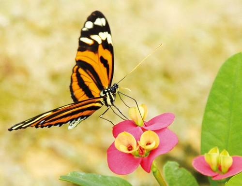 papillons-nl