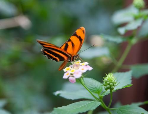 jardin-papillons1