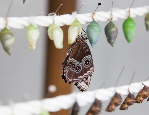 jardin-papillons2