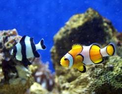 poisson-parc-merveilleux