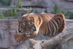 PHOTO © J. Fàbregas/Parc Zoològic de Barcelona