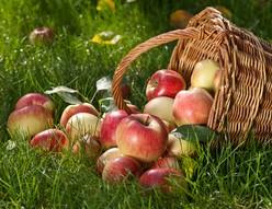 activite-nature-pommes