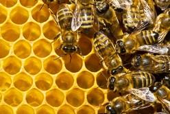 abeilles-3