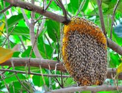 abeilles-4