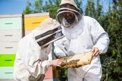 abeilles-5