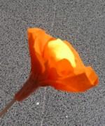 fleur-papier6