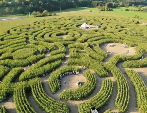labyrinthe-2014-2