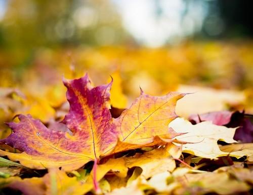 feuilles-tombent-en-automne-dp