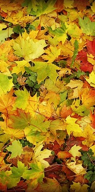 balades-automne