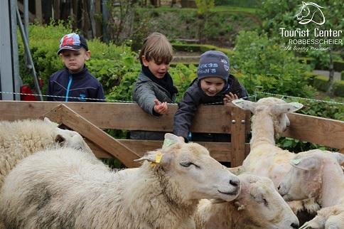 mouton-robbescheier