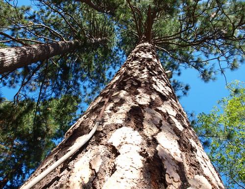 yosemite-sequoia