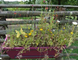 plantes-balcon